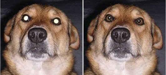 寵物的照片修除紅眼軟體 Pet Eye Fix Guide 1.3.2