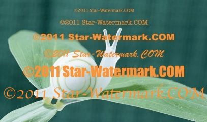 (水印軟體)Star Watermark Ultimate 1.1.3