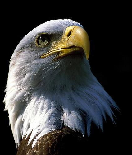 您『老鷹』還是『鴨子』?(命運大不同)